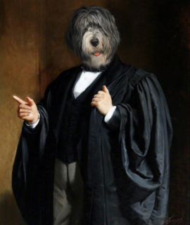 159-Portrait-de-bobtail-en-avocat-oeuvre-de-Daniel-Trammer-2.png