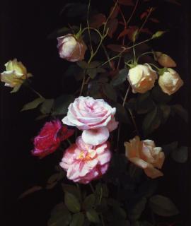 211-Lumiere-de-roses-oeuvre-originale-de-Daniel-Trammer-2.png